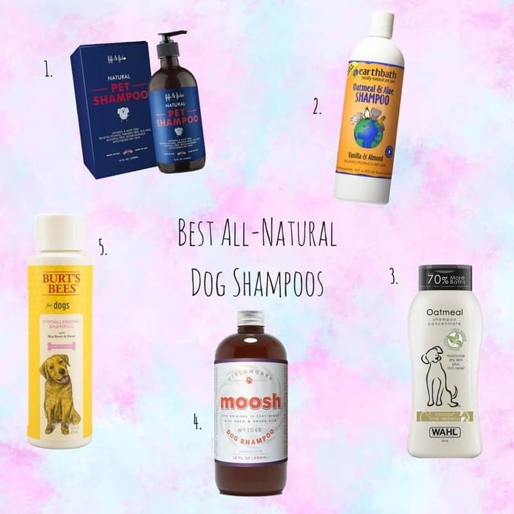 best all natural shampoo for dogs