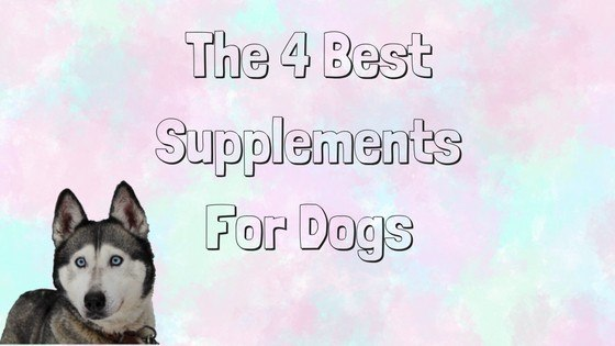 the 4 best natural supplements for dogs mhl