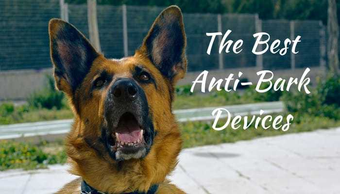 Best Anti Barking Devices for 2019 (Latest Research) | MHL