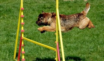 agility games for dogs