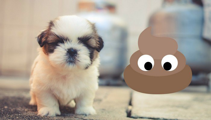 Why Does My Dog Eat Poop Mhl