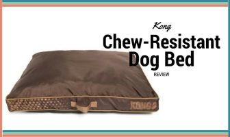 kong dog bed review