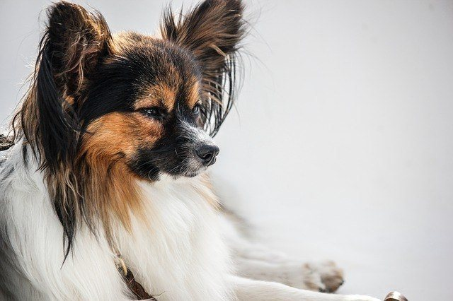 best breed for first time dog owners