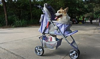small dog strollers