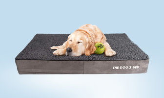 dog's bed review
