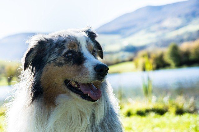 list of most intelligent dogs